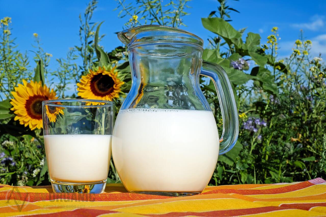 Manfaat Susu Kambing Segar
