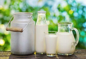 Susu Kambing Segar dari Ladang